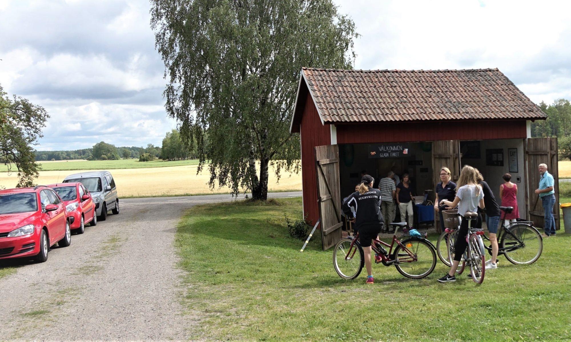 Glada fåret från förra årets Rebusrundan, besökare på cykel