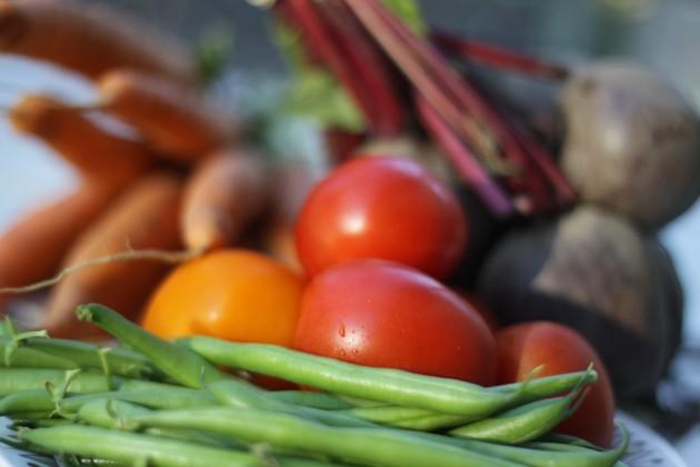Grönsaker från Härnevi plantskola