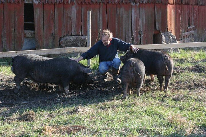 Domta-grisen, gårdsslakteri och gårdsbutik