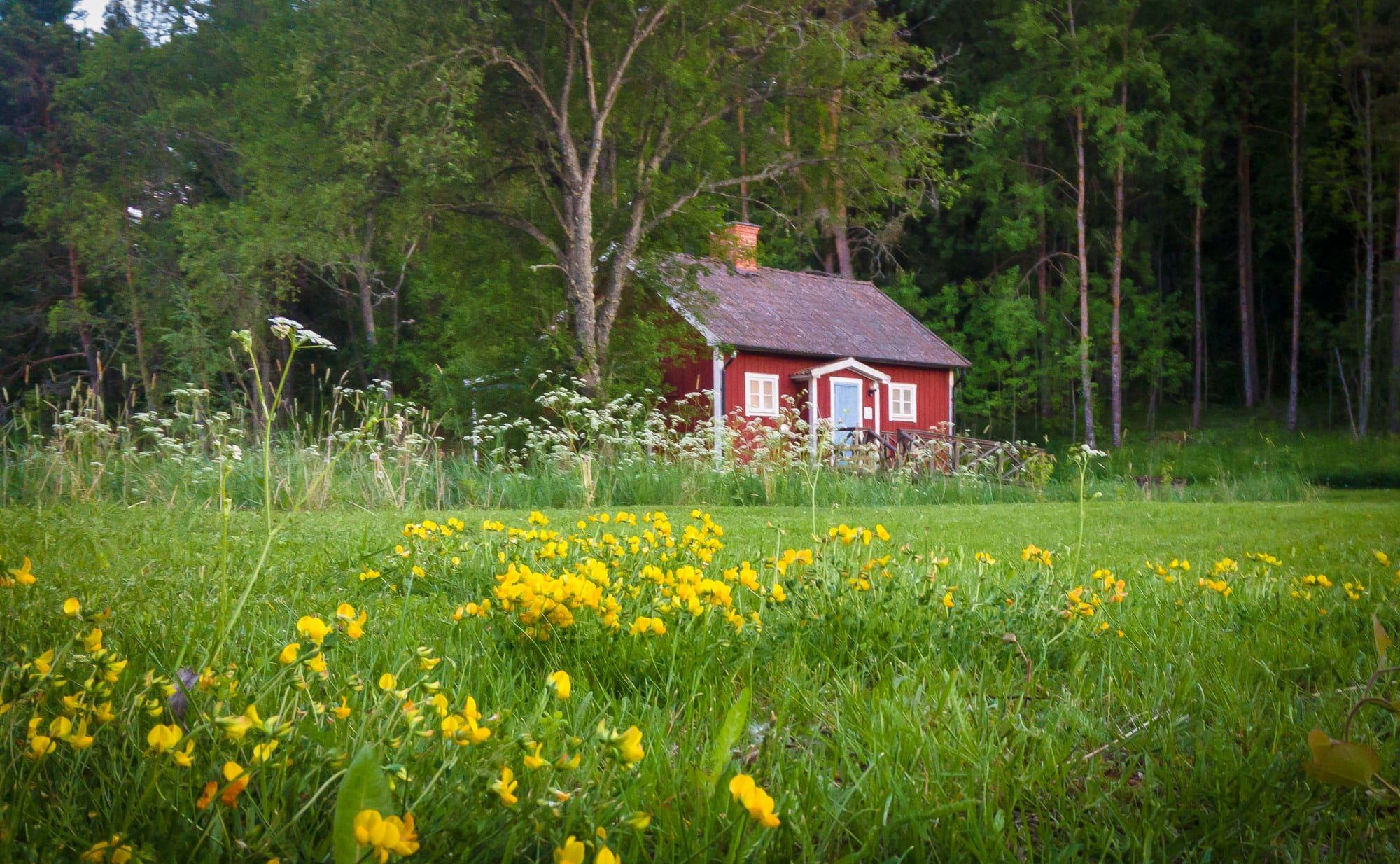 Pekoe ekologiskt te lager i Österunda bastu en sommardag