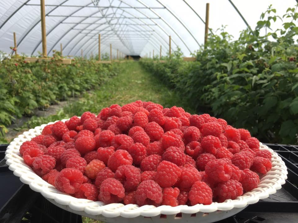 raspberry parks 1