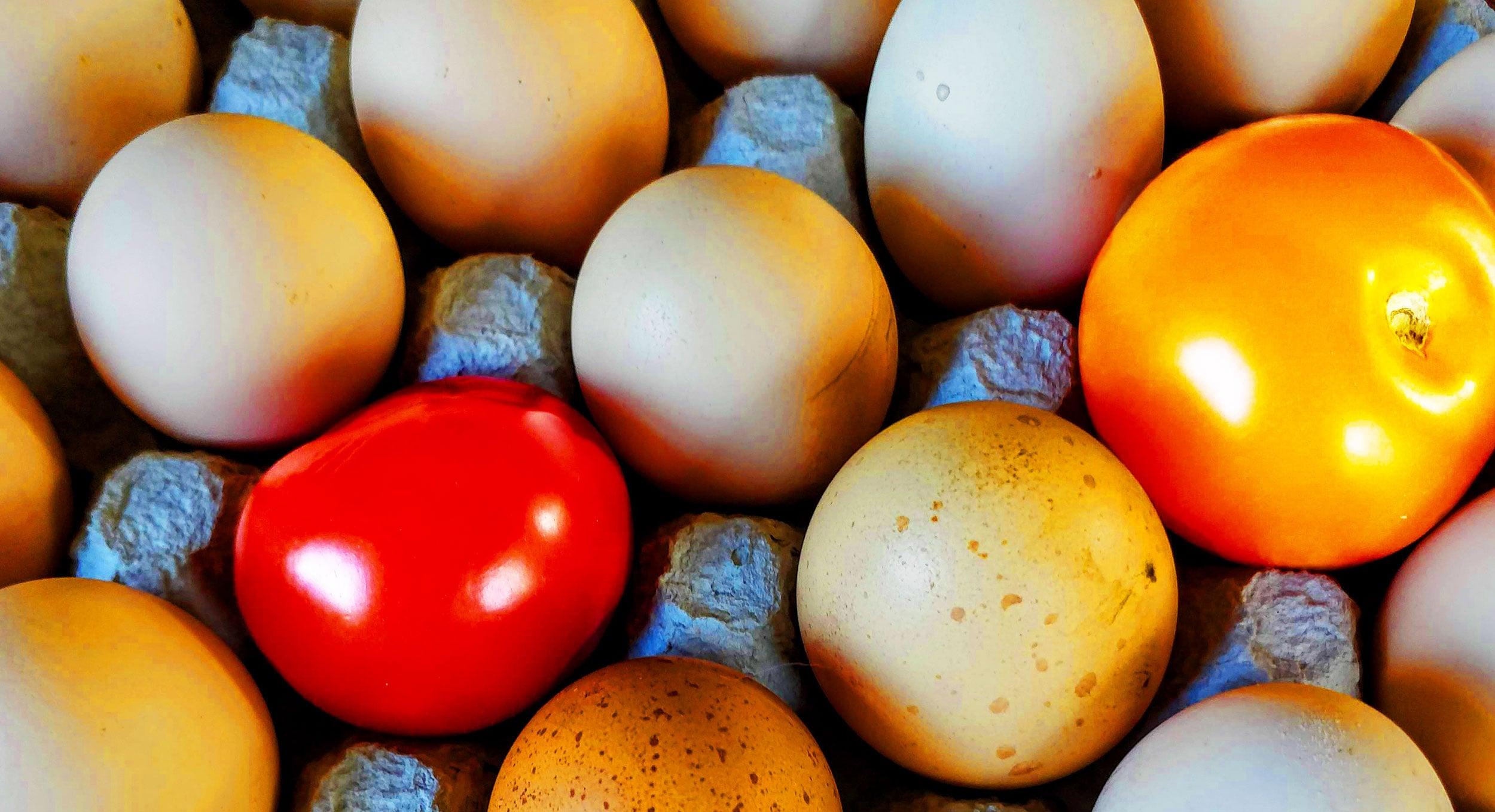 Mat och människor bild med tomater och ägg i äggkartong