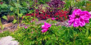 Bild på blomsterrabatt under trädgårdsrundan Tuva & Täppa