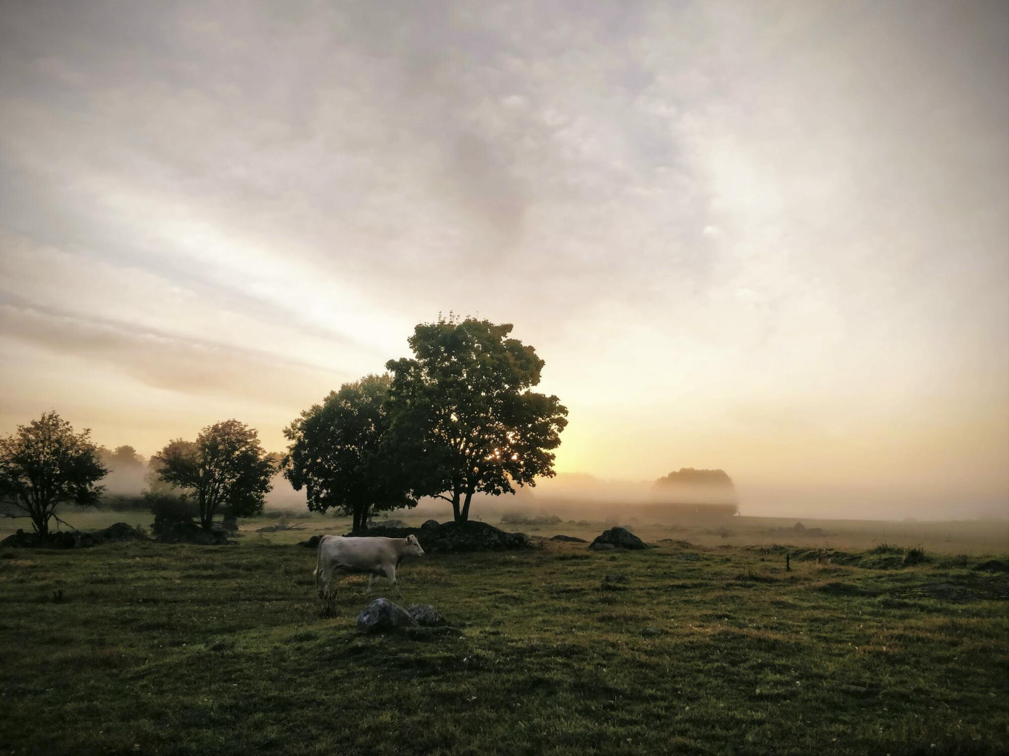 Ekbolanda farm magazine Fjärdhundraland